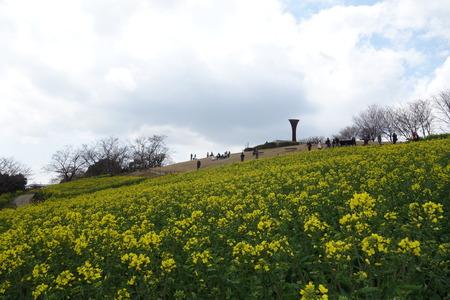 10−白木峰高原 菜の花DSC01524