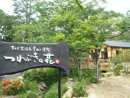 14-東彼杵町 そのぎ茶温泉 里山の湯宿 つわぶきの花P5310457