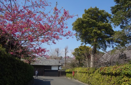 11-国見町神代小路 緋寒桜の郷まつりDSC00376