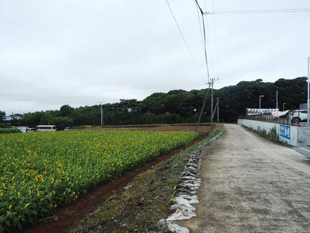 21-愛野町 コスモス近くP7214077
