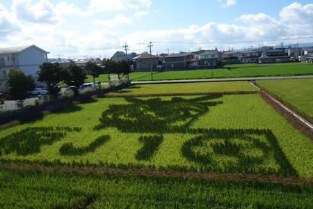 5-城南高校 田んぼアートDSC04157