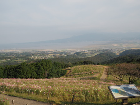 9-白木峰高原 コスモス畑PA110807