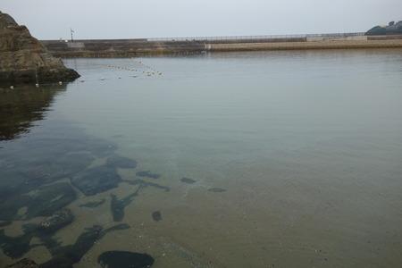 9-有喜海水浴場DSC00756