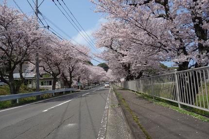 23-多良見古川の桜DSC04777