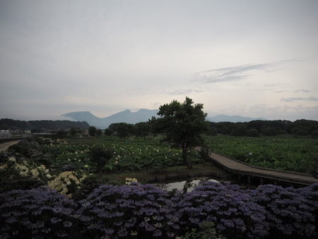 2-長崎県諫早市森山町 唐比の蓮園P6210032