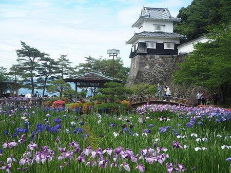 8-大村公園 花菖蒲PP5310071
