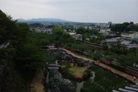 21-大村公園 花菖蒲DSC07602