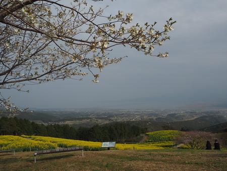 9-諫早市 白木峰高原の菜の花P3193682
