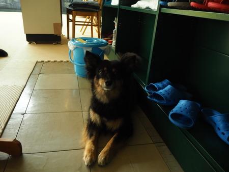 9-7-Dog catista ドッキヤイスタP6281616