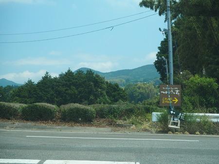 8-東彼杵町 そのぎ茶温泉 里山の湯宿 つわぶきの花P5310202