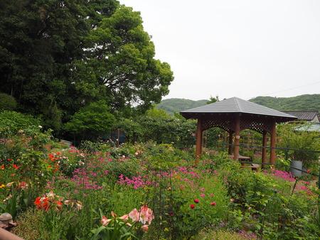 7-諫早市栗面町 Mai's garden P5171450