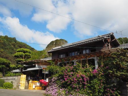 9-長崎市田中町 みかん山の収穫祭PB043929