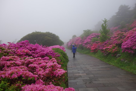 22-雲仙 仁田峠 ミヤマキリシマDSC06834