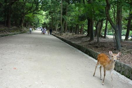 5-奈良公園DSC09098