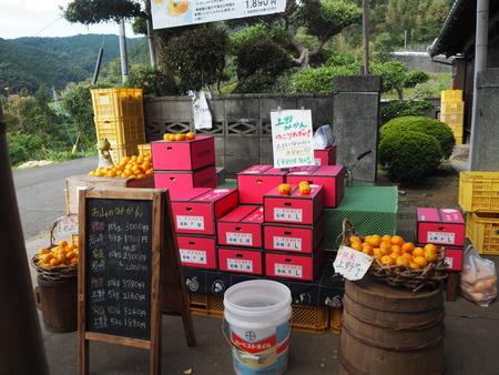11-長崎市田中町 みかん山の収穫祭PB044005