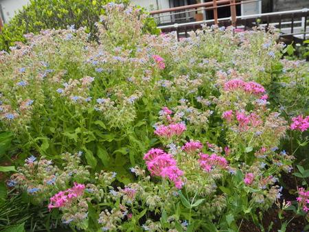 8-諫早市栗面町 Mai's garden P5171374