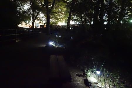 5−諫早公園 ホタルDSC02252