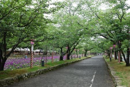 24-大村公園 花菖蒲DSC07640