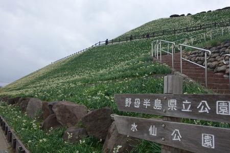 15−野母崎水仙祭りDSC00212