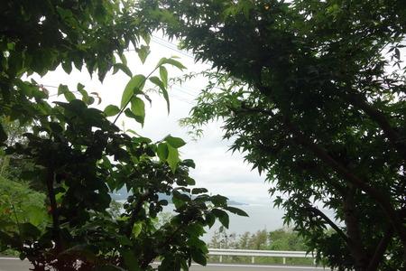 15-くすの木DSC09968