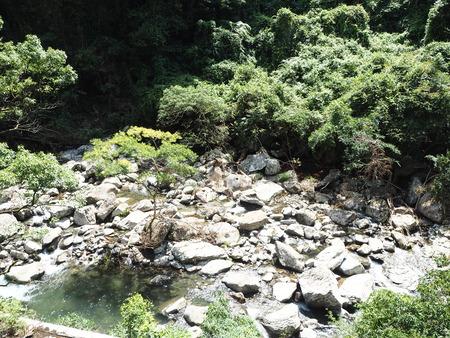 14-東彼杵町 滝の上の猫P8010202