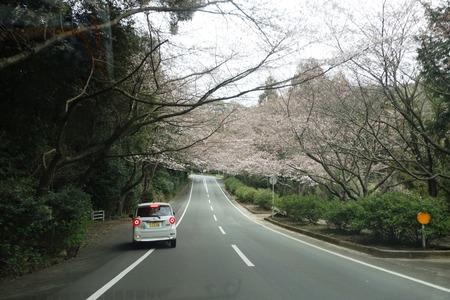 3-森山町 桜並木DSC00958