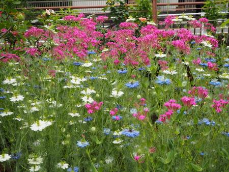 11-諫早市栗面町 Mai's garden P5171386