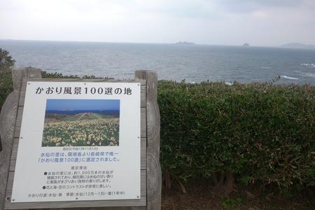 9-のもざき水仙まつりDSC03519