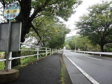 12-古川の桜並木DSC06198