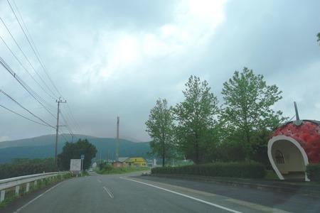 1-山茶花高原DSC07623