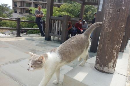 13−雲仙温泉 地獄猫DSC04583
