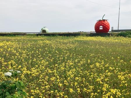 諫早市小長井町 フルーツバス停と菜の花IMG_2302