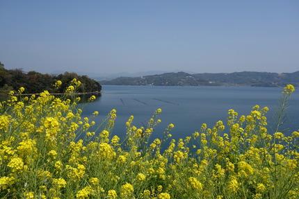 12-多良見町古川の桜DSC04139
