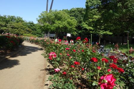 10−平塚市総合公園DSC02458