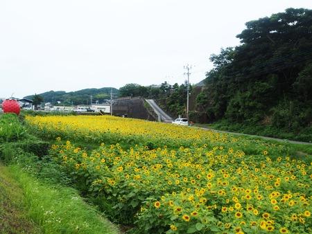 6-諫早市小長井町 フルーツバス停とひまわりP7193402