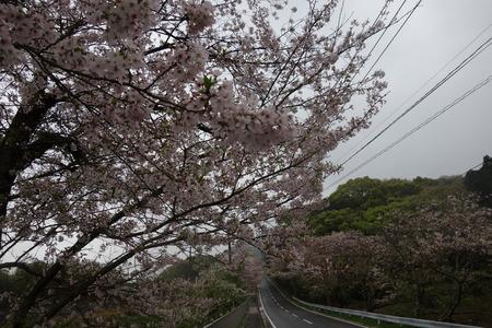 6−多良見町古川の桜並木DSC02005