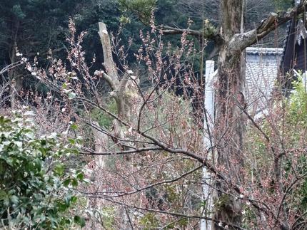 5-高城神社DSC08440