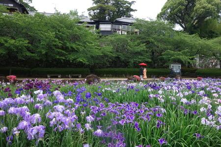 14-五島大村公園 花菖蒲DSC07558