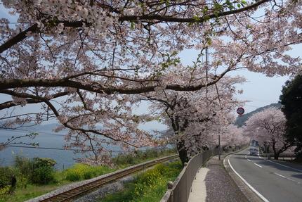 18-多良見古川の桜DSC04706