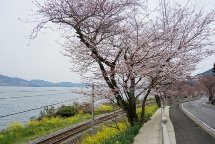 10−207号線多良見町古川の桜DSC03541