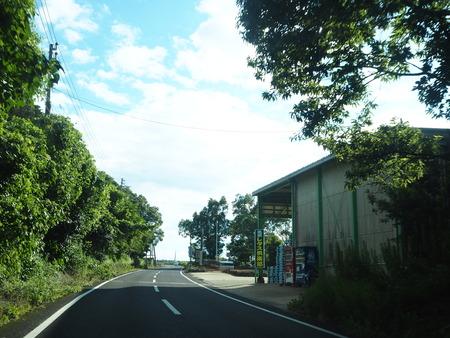 8-南島原市加津佐町 大地牧場のひまわり畑P8126287