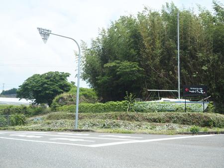 4-東彼杵町 そのぎ茶温泉 里山の湯宿 つわぶきの花P5310192