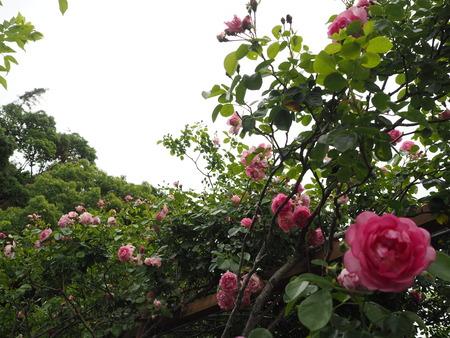14-諫早市栗面町 Mai's garden P5171403