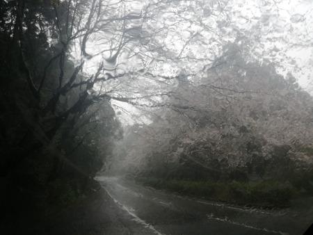 1-森山町 桜並木IMG_20200327_115710
