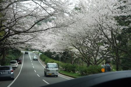 7−唐比の桜並木DSC01908