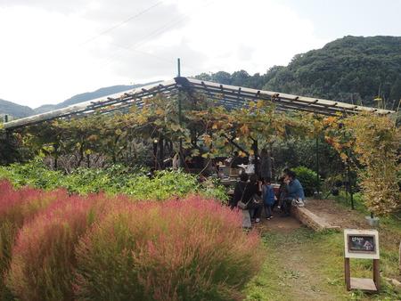 21-長崎市田中町 みかん山の収穫祭PB044064