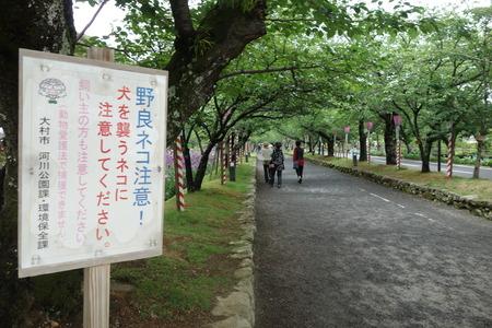 26-大村公園 花菖蒲DSC07643