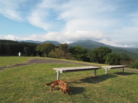 7-白木峰高原 コスモス畑PA110792
