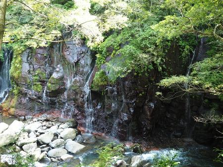 5-東彼杵町 滝の上の猫P8010264