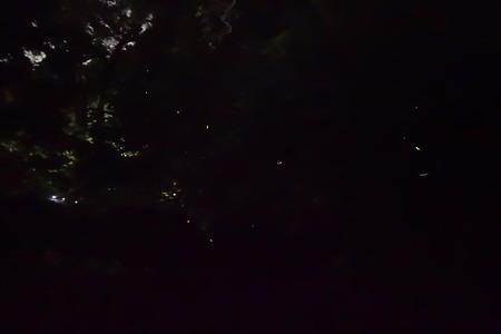 8-諌早公園 蛍DSC02247